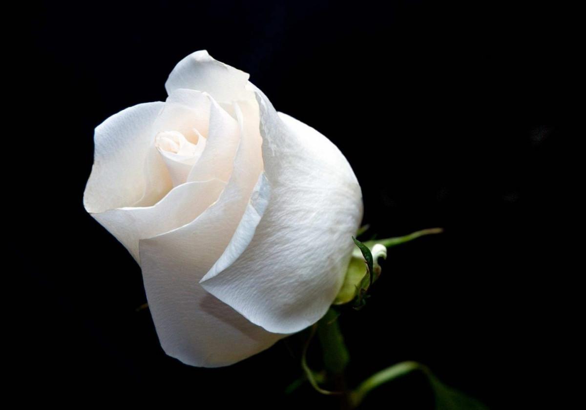 Descanse en paz †Enfra. Olga Margarita R. de R.